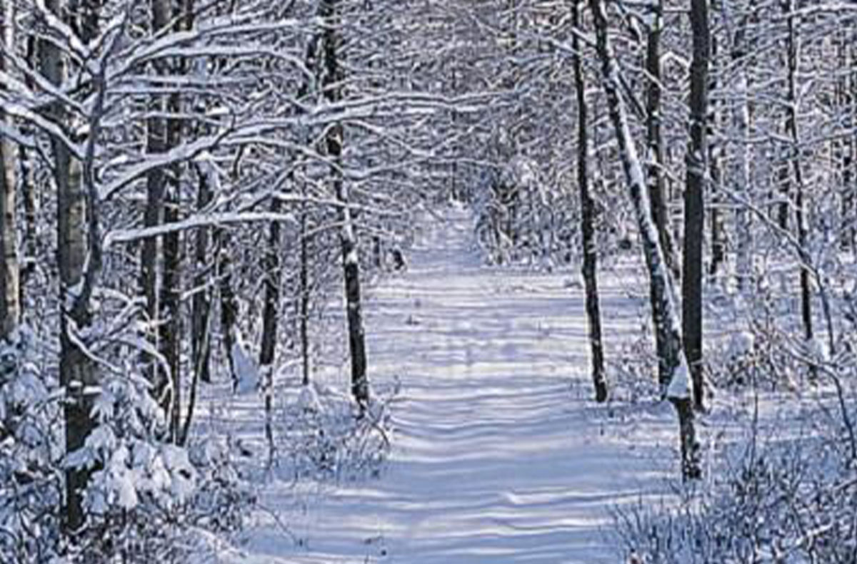 wintry trail in Harrison Hills Park