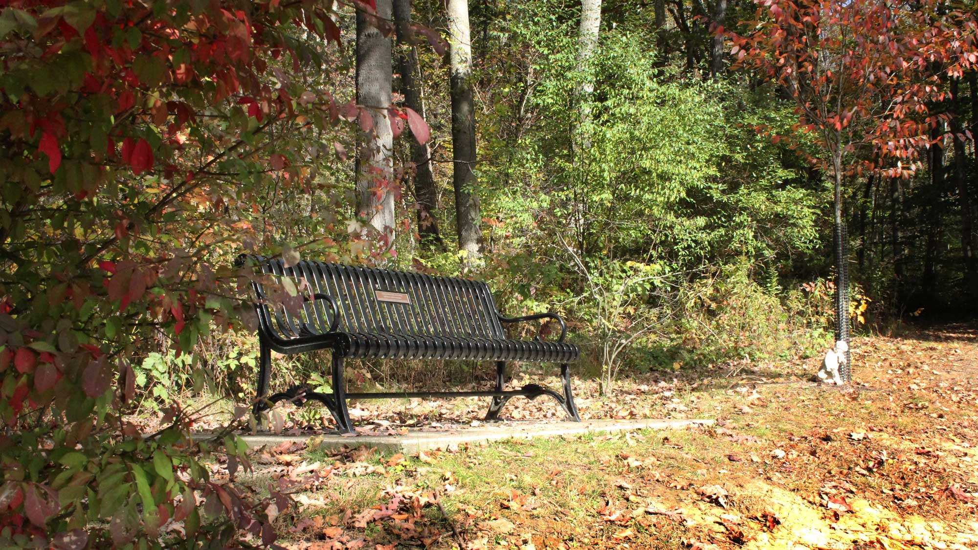 Boyce Park bench