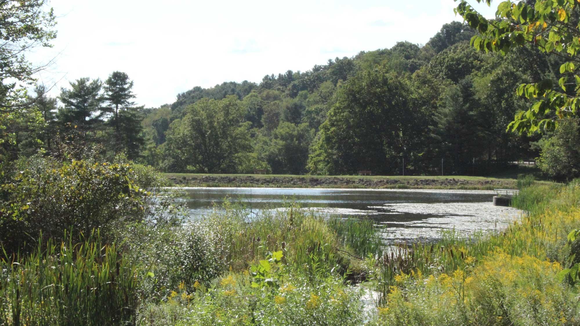 Deer Lakes Park pond