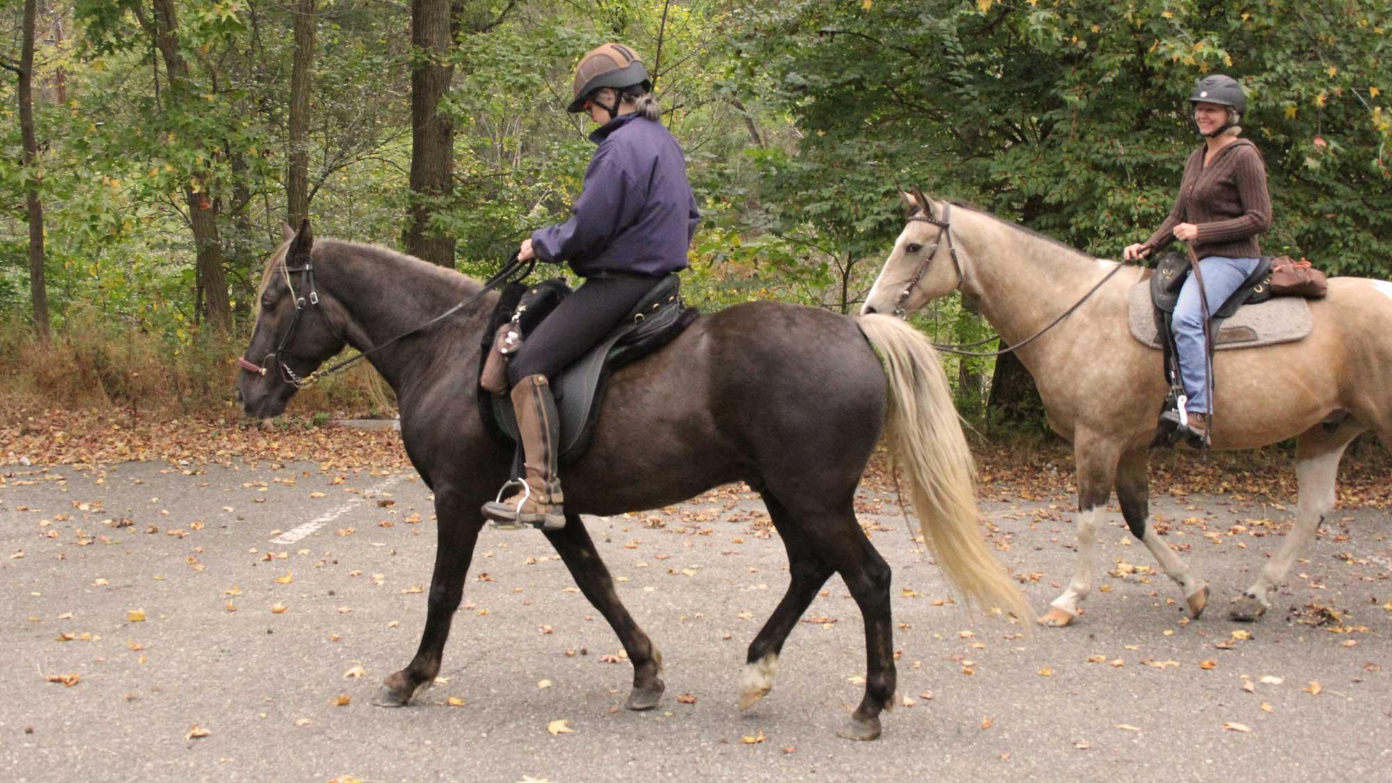 Harrison Hills Park horseriding