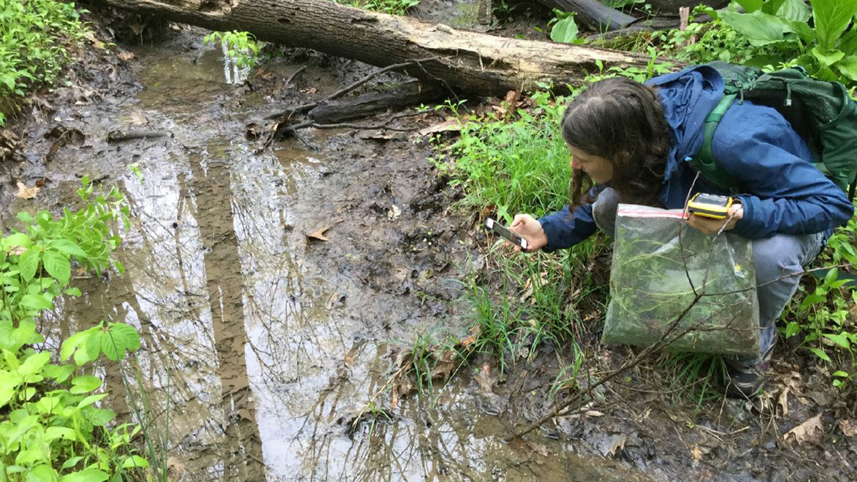 Woman assesses water in creek at Allegheny County Parks