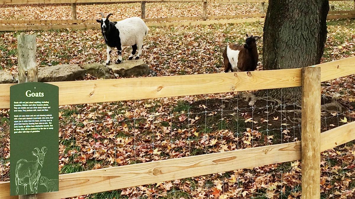 Goats signage