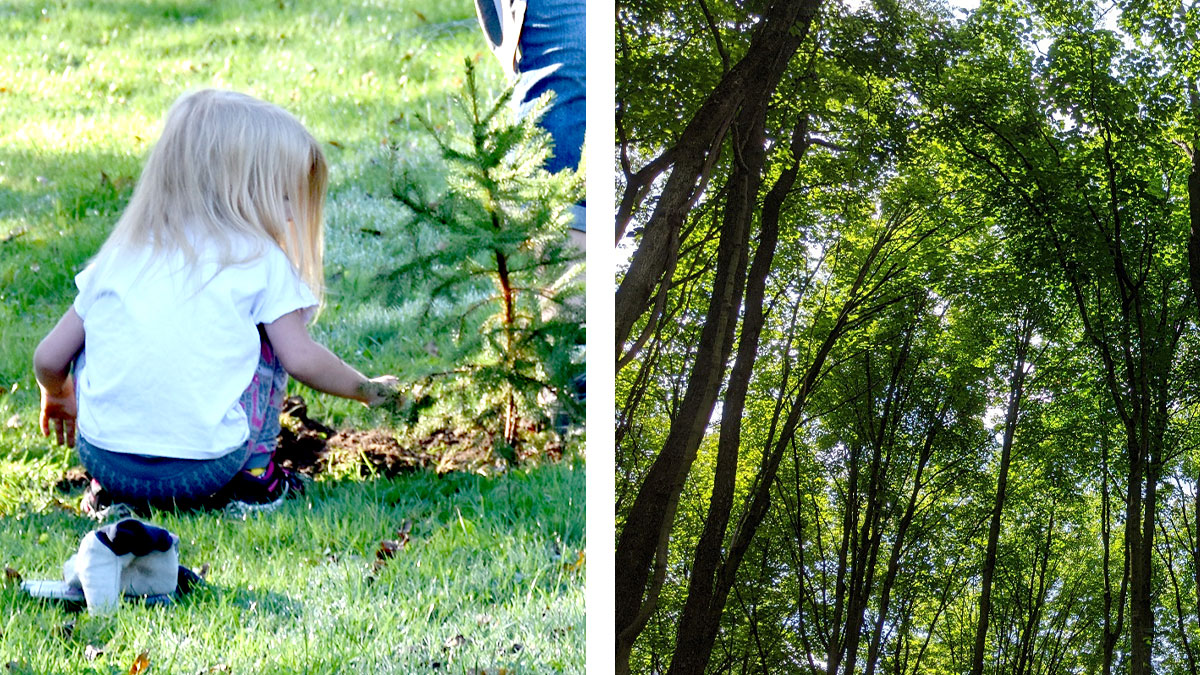 Young girl plants trees in Allegheny County Parks. Pittsburgh PA